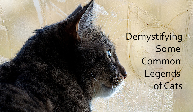 Myths about Felines Mere Facts or Cat Fiction?