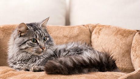 Happy & Healthy Indoor Cats