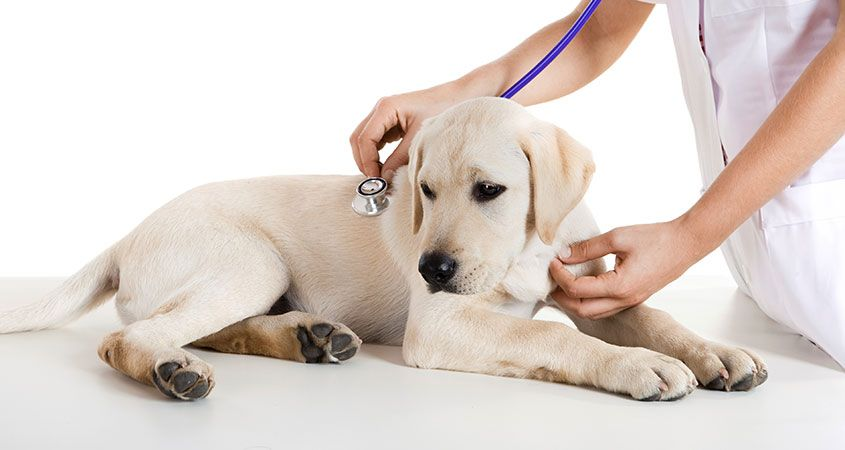 Routine Veterinary Visits for Dogs