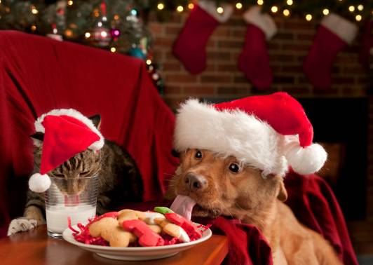 pet safety tips to follow this holiday season celebration