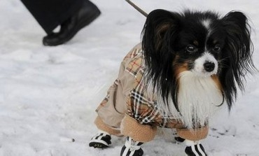 Protect Your Dog From The Winter Season