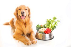pet diet in winter