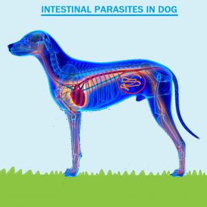 Intestinal Parasites in Dogs - Canada Pet Care Blog