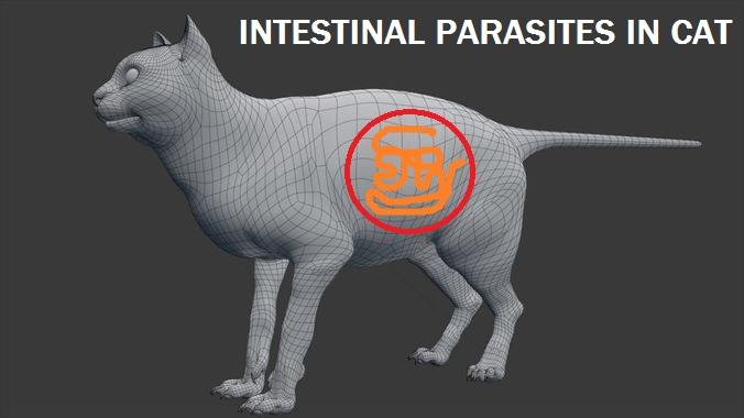 Intestinal Parasites in Cats - Canada Pet Care Blog