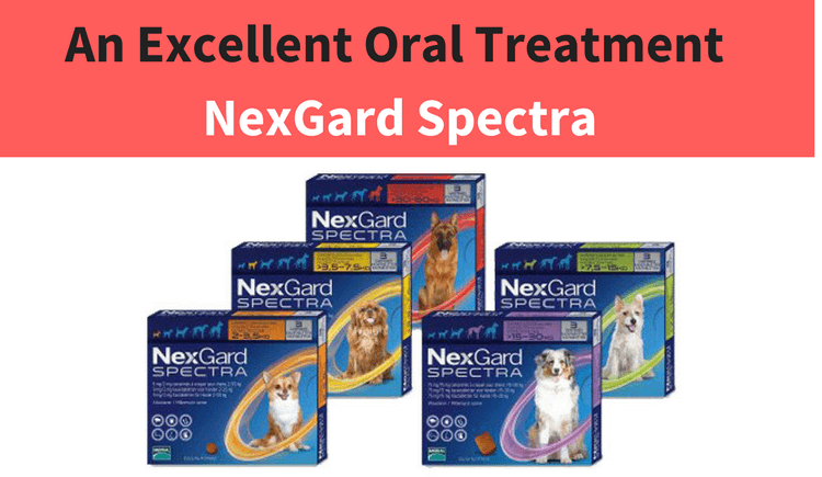 Nexgard Spectra Tab- Canada Pet Care Blog