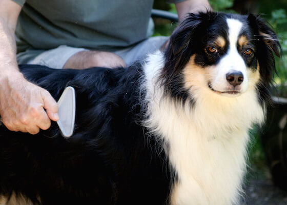How to make your pet's coat healthy and shiny? - Canada Pet Care Blog