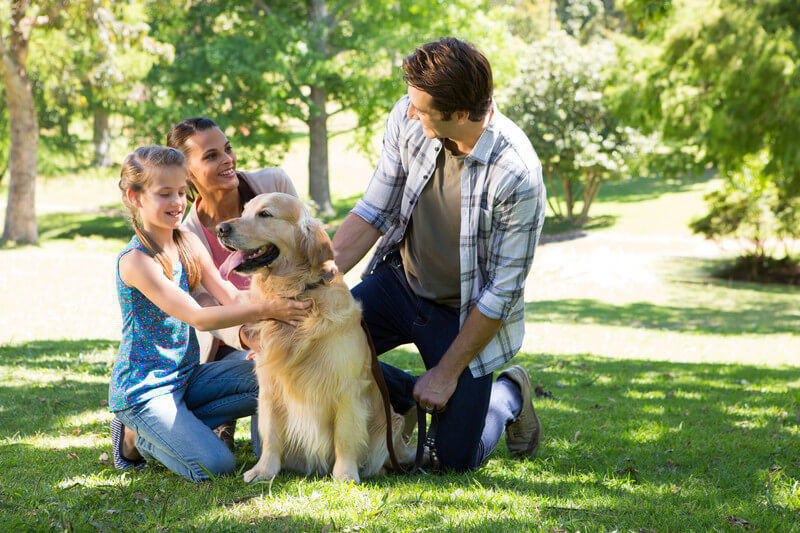 Networking with People - 5 Major Factors to Consider Before Buying a Pup Raised Outside - Canada Pet Care Blog