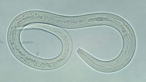 Hookworm Treatment - Canada Pet Care Blog
