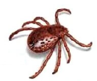 Ticks Treatment - Canada Pet Care Blog