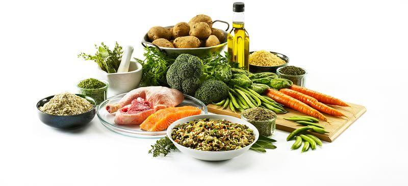 Vitamins for Skin Health - Canada Pet Care Blog