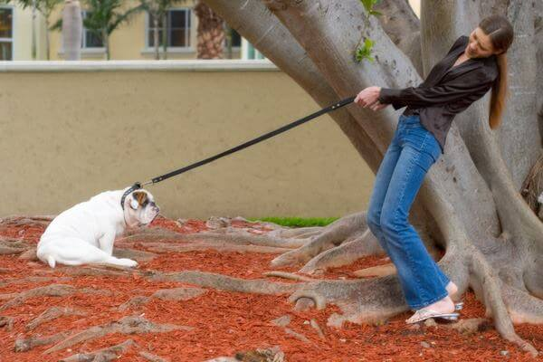 Unacceptable Manners: Solutions To Behavioral Concerns In Dogs - Canada Pet Care