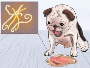 Get Rid of Your Dog's Roundworms