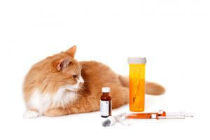 Treatment Options For Felines