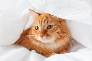 cat arthritis diseases