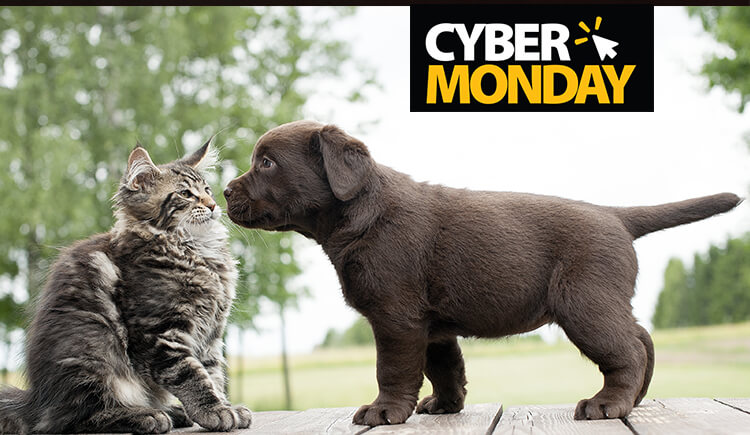 Cyber Monday Deals On Pet Supplies Bless Your Pets With Good Products Canadapetcare Blog