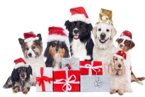 Dogs-celebrating-Christmas