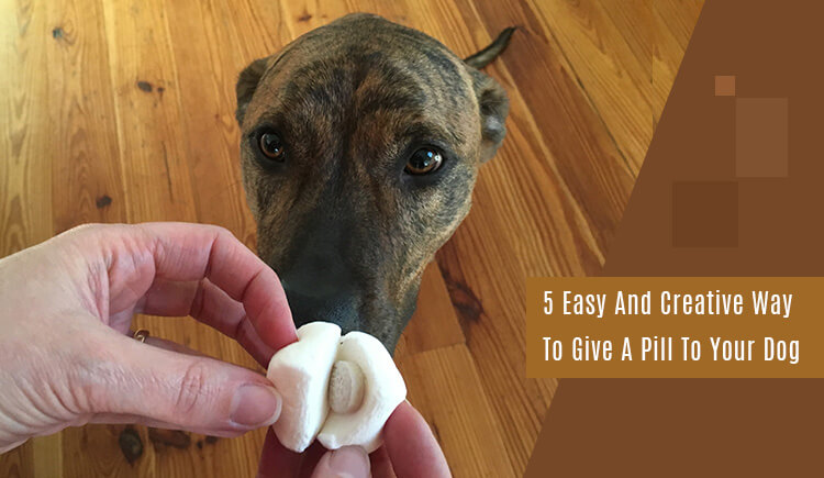 Give A Pill To Your Dog