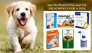Flea And Tick Treatments For A Dog