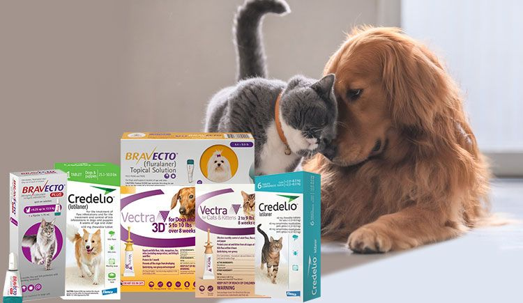 Top Trending Flea and Tick Treatment Products in 2019
