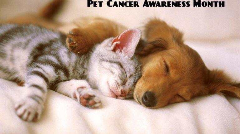 Pet Cancer Awareness Month