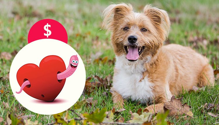 Heartworm Treatment