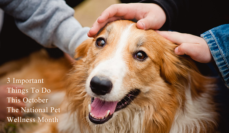 3 Important Things To Do This October – The National Pet Wellness Month