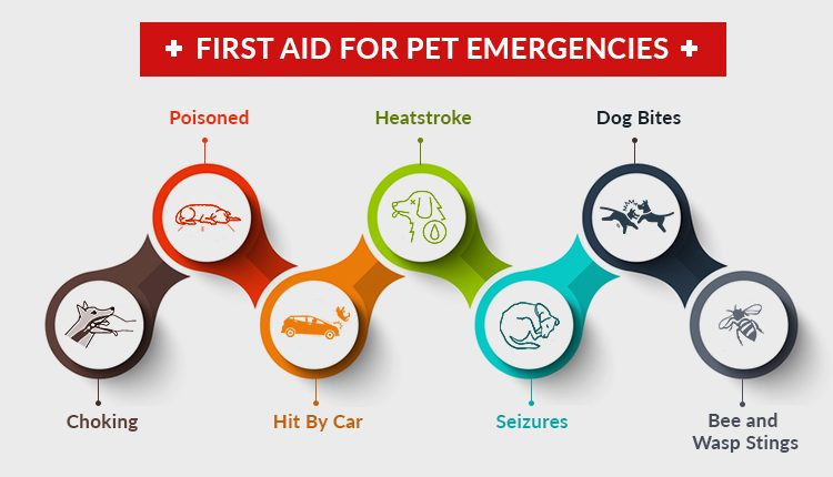 Most Helpful First Aid Hacks for Your Pet Emergencies