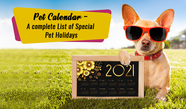Pet Holidays 2021: Calendar Every Pet Lovers Must Have