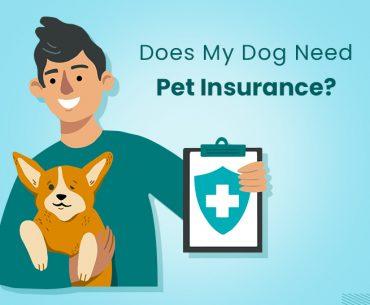 Why Do I Need To Insurance My Pet?