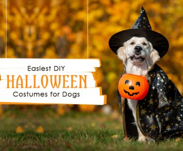 DIY Halloween Costumes for Dogs