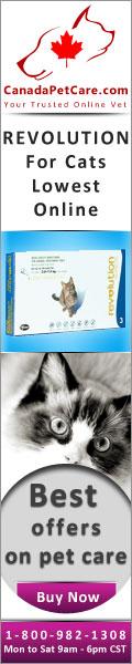 CanadaPetCare.com-Revolution-Cat